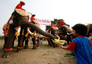 amazing-thailand-surin-wax-2014