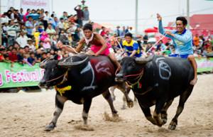amazing-thailand-chonburi-buffalo-racing-2014