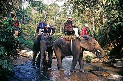 amazing-tailand-mahout
