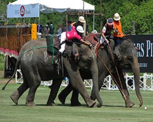 amazing-thailand-campeonato-polo-elefante