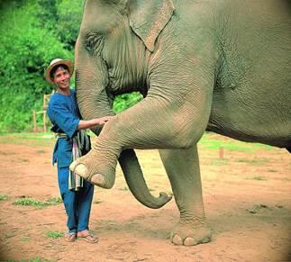 thai elephant conservation center en Chiang Mai