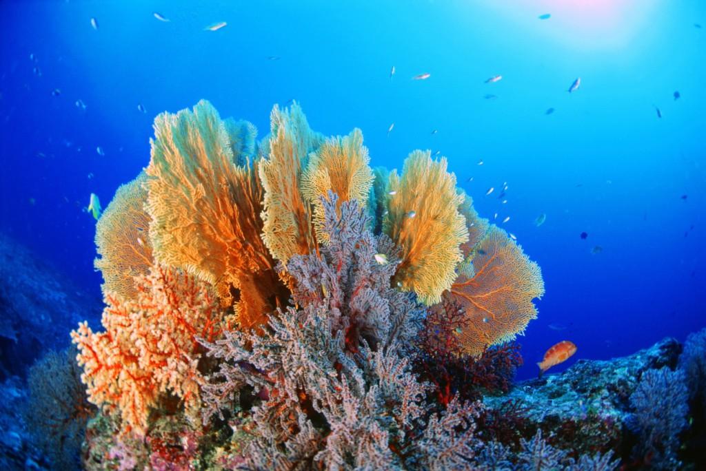 Foto 02- Coral