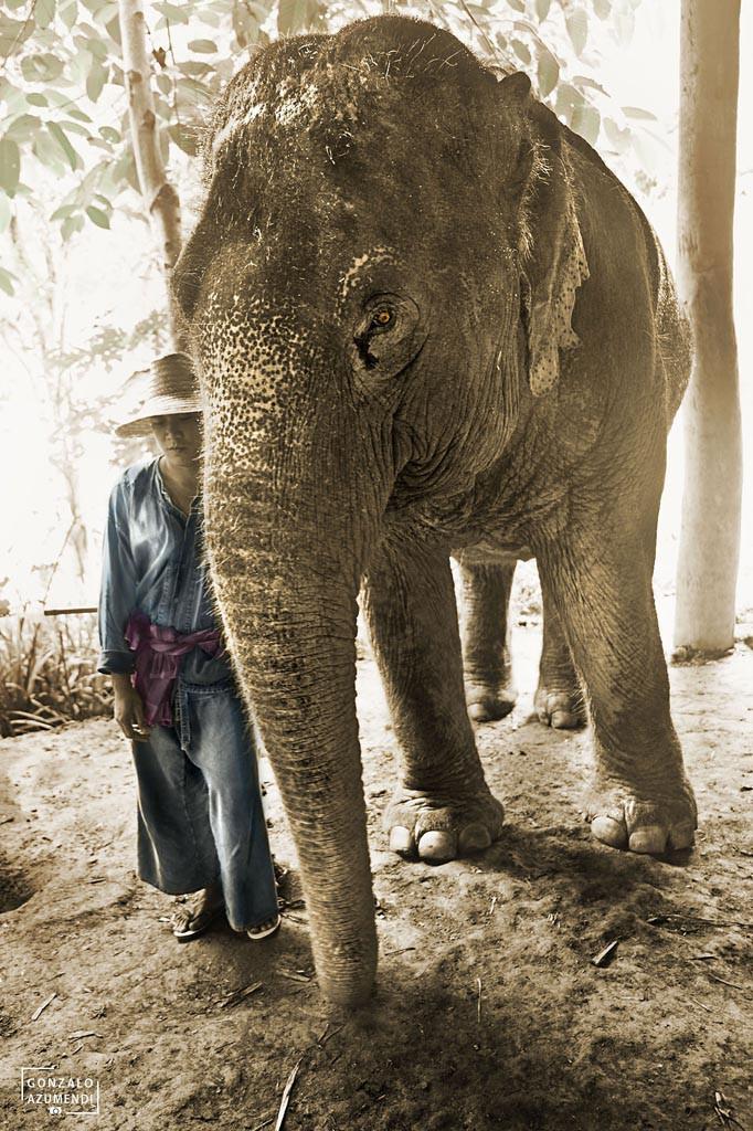 El Blog de Tailandia- Elefante