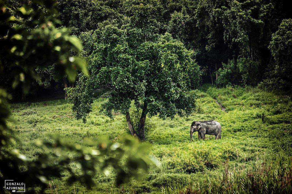 El Blog de Tailandia- Elefante en Four Seasons
