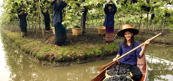 Foto: Monsoon Valley Wine