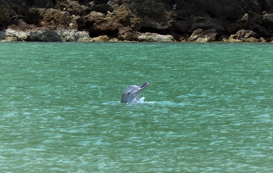Cría de delfín rosa con un pez en la boca