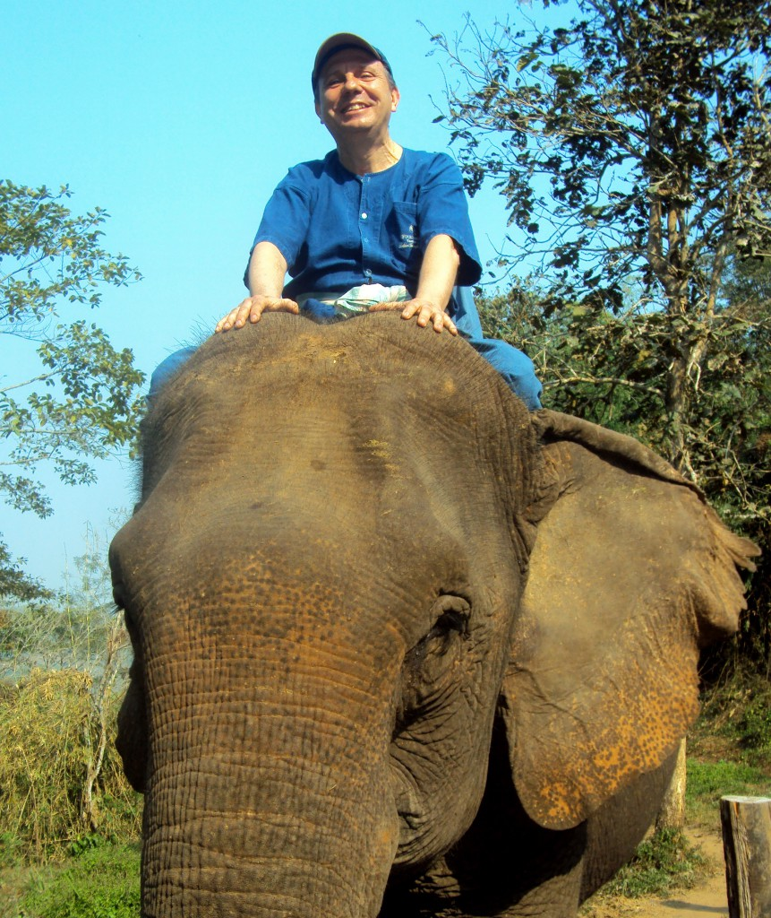 El Blog de Tailandia elefante chiang rai (2)