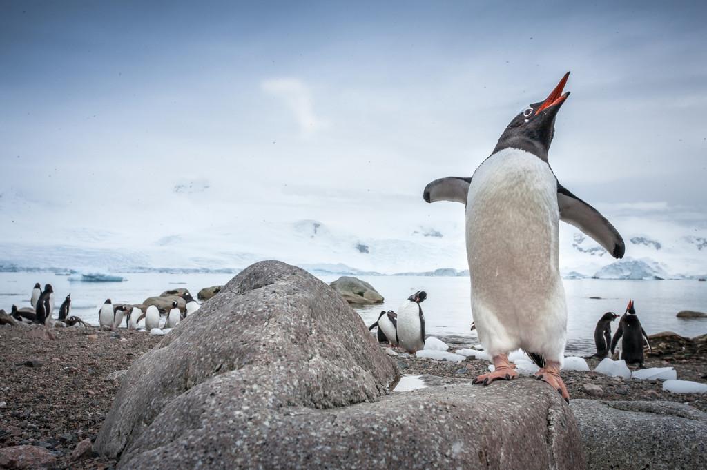 Maurice, el pingüino
