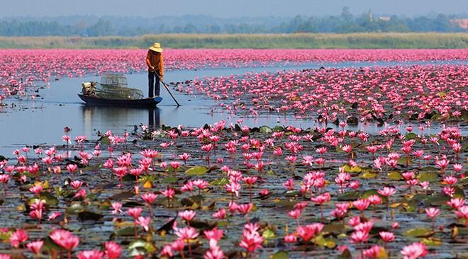 Flor de loto en Udon Thani