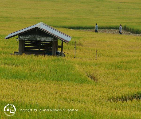 El Blog de Tailandia - destacada