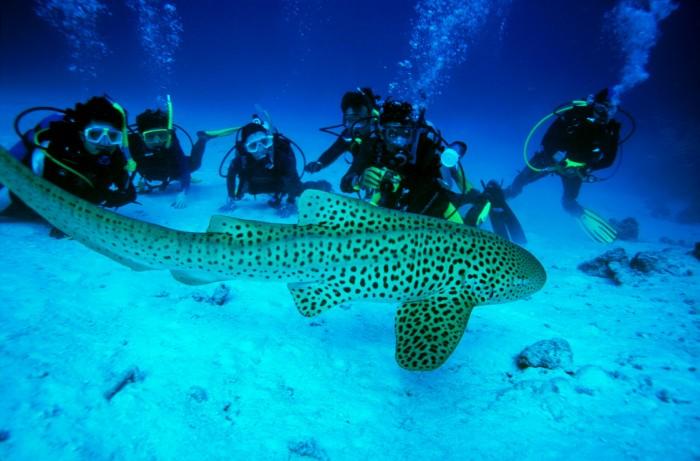 Turismo Tailandia_Scuba-Diving-Andaman-Sea_3