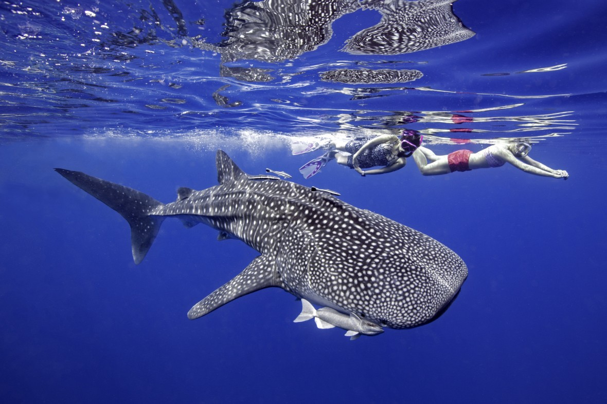 Turismo Tailandia_Whale Shark at Losin Island, is located between Pattani and Narathiwat
