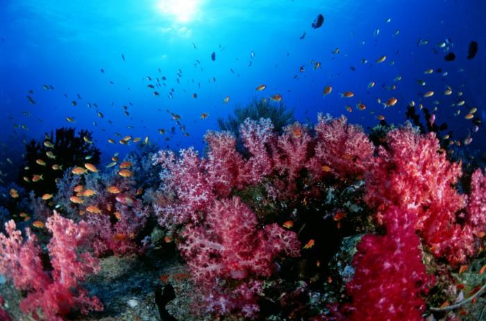 Turismo Tailandia_Scuba-Diving-Andaman-Sea_3-16865794423