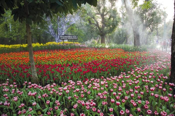 Chiang-Rai-00016461 FOTO PORTADA