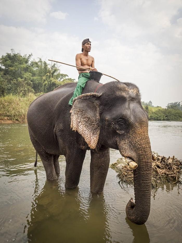 Tailandia – Mae Sin Elephant Camp