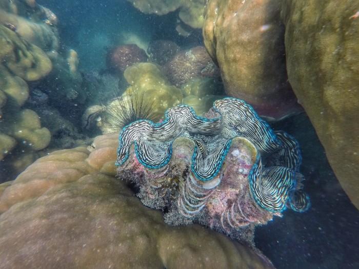 Turismo de Tailandia - Buceo en Samet