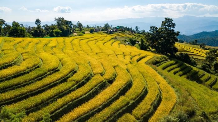 Turismo de Tailandia 5