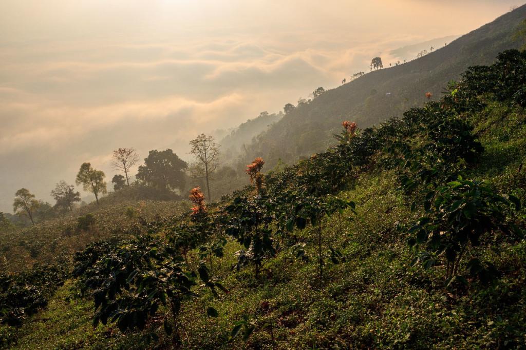 Suan Ya Luang (Nan) - Mares de niebla
