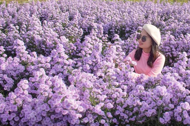 1_Chiang-Mai-in-bloom-I-love-flower
