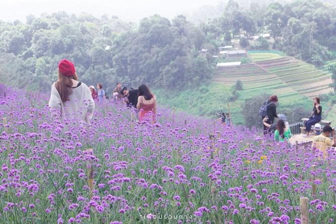 2´_Chiang-Mai-in-bloom-Rai-Dok-Lom-Nao-1-Resize