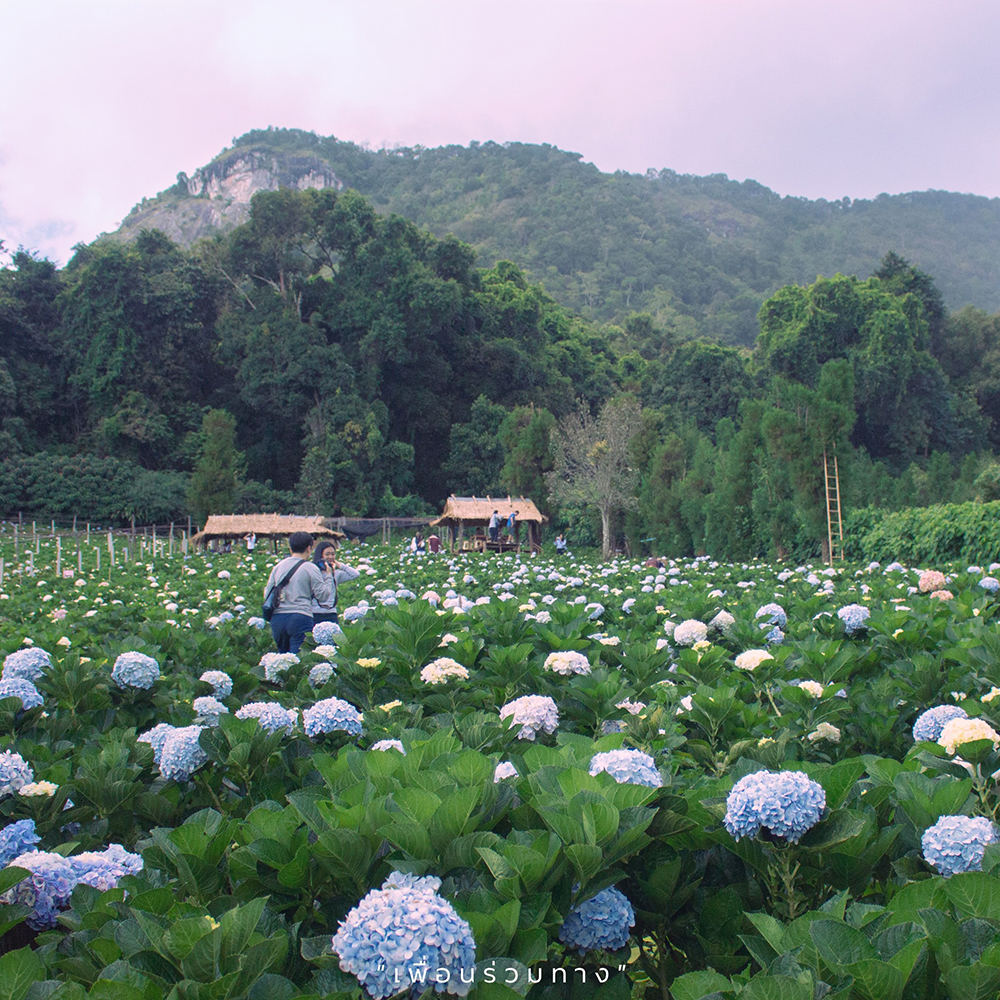 4_Chiang-Mai-in-bloom-Khun-Pae-Royal-Project-2-Resize